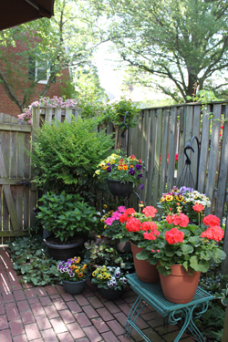 Patio Plantings/Hangings - Photo by Ron Patterson