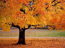 Photo of Fall Color